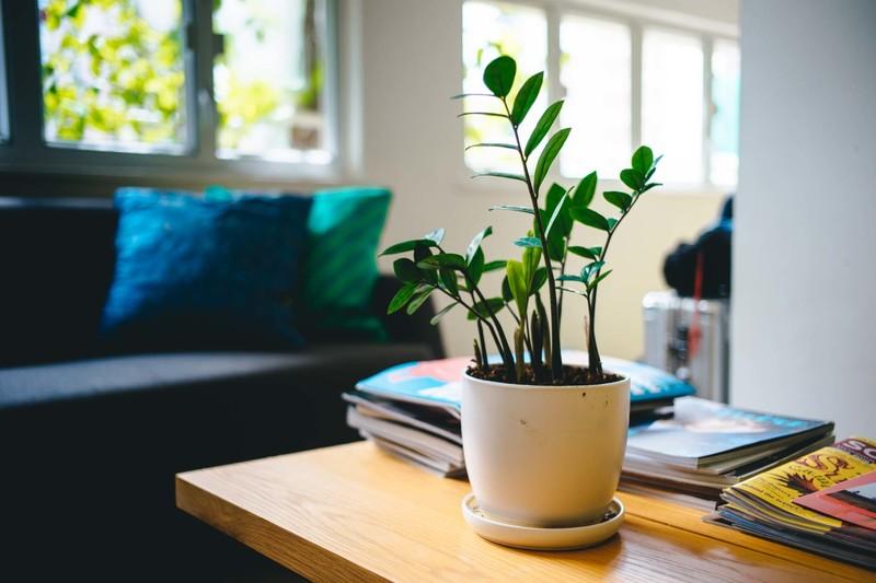 Lounge plant